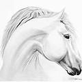 Horse by Don Medina