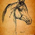 Horse Drawing by Angel  Tarantella