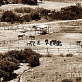 Horse Farm At Kourion by John Rizzuto
