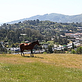 Horse Hill Mill Valley California 5d22662 by Wingsdomain Art and Photography