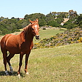 Horse Hill Mill Valley California 5d22679 by Wingsdomain Art and Photography