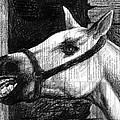 Horse by Mark Zelmer