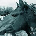 Horse Sense by Steven Milner