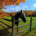 Horse Under Tree By Fence by Dan Friend