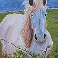 Horse With Stormy Skies by Dawn Dreibus