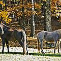 Horses In Autumn Pasture   by Susan Leggett