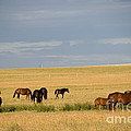 Horses In Saskatchewan by Mark Newman
