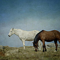 Horses On A Hill by Kathy Jennings
