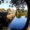 Hot Air Balloons through Tree Print by Carol Groenen
