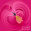 Hot Pink and Round Print by Anne Gilbert