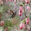 Hummingbird Heaven by Angie Vogel