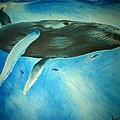 Humpback Whale by Lucy D
