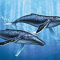 Humpback Whales by JQ Licensing