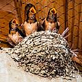 Hungry Baby Swallows - Antelope Island - Utah by Gary Whitton