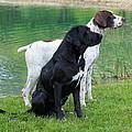 Hunting Dogs 1 by Rachel Munoz Striggow