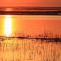 Hunting Island Tidal Marsh by Michael Weeks