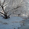 Ice Covered Tree And Creek In Montana by Bruce Gourley