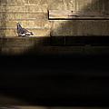 Il Piccolo Guardiano by Bob Orsillo