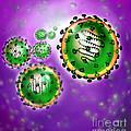 Illustration Of Sars Virus by Jim Dowdalls