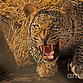 In No Uncertain Terms by Ashley Vincent