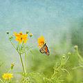 In The Garden - Monarch Butterfly by Kim Hojnacki