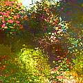 In The Garden by Pamela Cooper