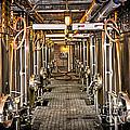 Inside Winery by Elena Elisseeva