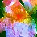 Iris 53 by Pamela Cooper