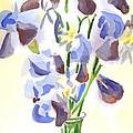 Irises Aglow by Kip DeVore