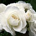Ivory Rose Bouquet by Jennie Marie Schell