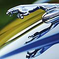 Jaguar Car Hood Ornament by Jill Reger