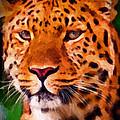 Jaguar by Michael Pickett