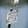 JAPANESE WATERFOWL - KYOTO JAPAN Print by Daniel Hagerman