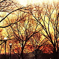 Jefferson Memorial - Washington Dc - 01135 by DC Photographer