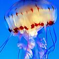 Jellyfish 3 by Dawn Eshelman