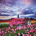 John Deere Pink by Darren  White