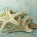 Journey To The Sea Starfish by Inspired Nature Photography Fine Art Photography