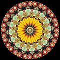 Kaleidoscope Ernst Haeckl Inspired Sea Life Series Triptych Print by Amy Cicconi