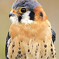 Kestral