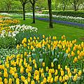 Keukenhof Gardens 93