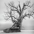 Killer Tree - Outer Banks by Dan Carmichael