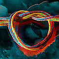 Knotting Rainbows