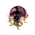 Ladybird Macro by Jane Rix