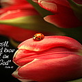Ladybug and Tulip