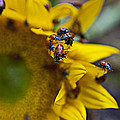 Ladybugs Close Up by Garry Gay