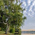Lake Quannapowitt in Massachusetts  Print by Pat Lucas