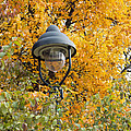 Lamp In The Autumn Leaves by Michal Boubin