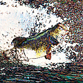 Largemouth Bass P180 by Wingsdomain Art and Photography