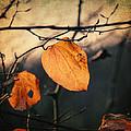 Last Leaves by Taylan Soyturk