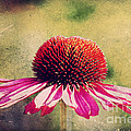 Last summer feeling Print by Angela Doelling AD DESIGN Photo and PhotoArt